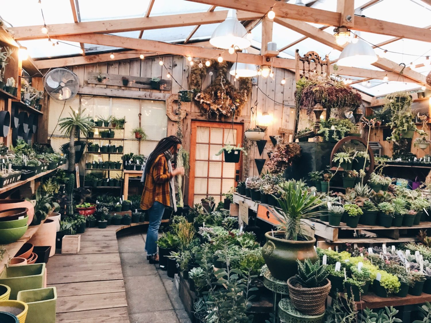 Picking Succulents plants life-style