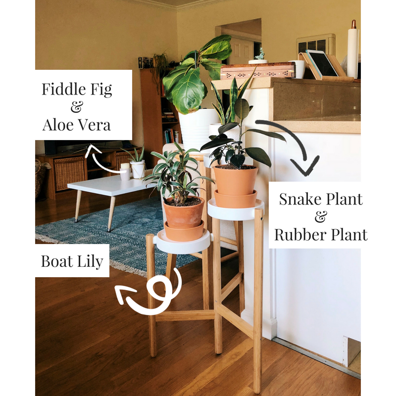 Adding New Plant Babies to the Home plants life-style