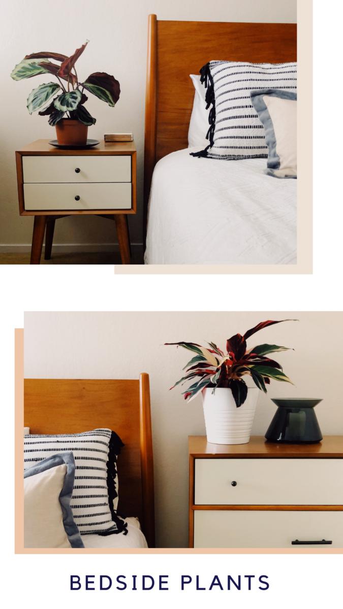 New Bedroom Plants popular-posts plants life-style